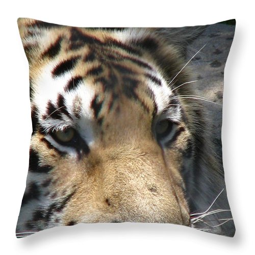 Patzer Throw Pillow featuring the photograph Tiger Water by Greg Patzer