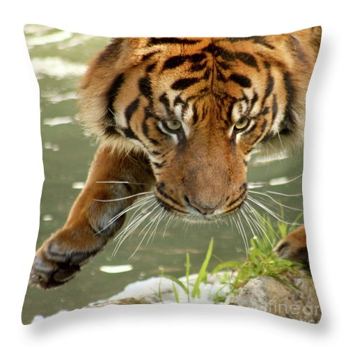 Tiger Throw Pillow featuring the photograph Tiger's Stealth by Bob and Jan Shriner