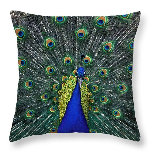 Peacock Throw Pillow featuring the photograph Tiki by Kathy Yates