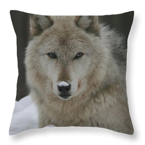 Timber Throw Pillow featuring the photograph Timber Wolf by Ken Keener