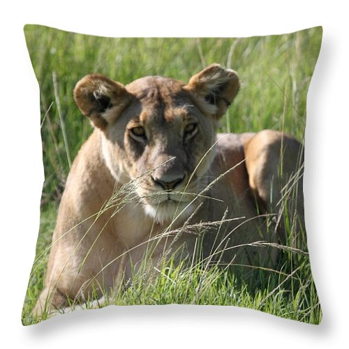Africa Throw Pillow featuring the photograph Time Out All Profits Go To Hospice Of The Calumet Area by Joanne Markiewicz