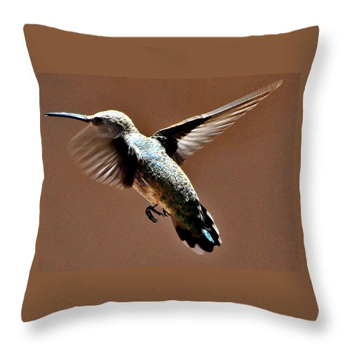 Hummingbird Throw Pillow featuring the photograph Time To Leave by Jay Milo