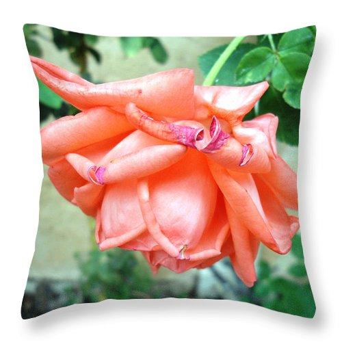 Rose Throw Pillow featuring the photograph Time's Up by Lovina Wright