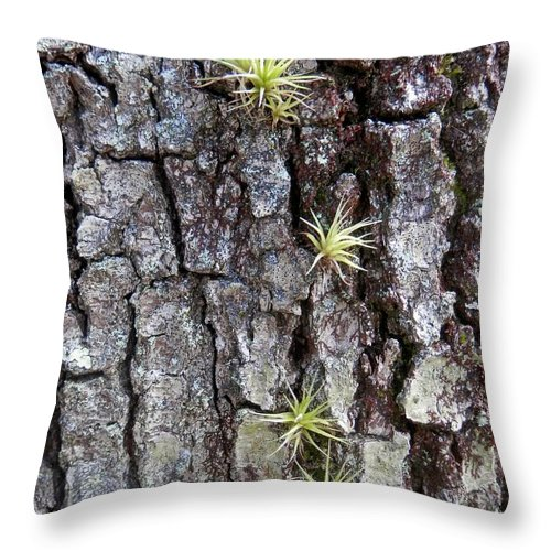 Twisted Oaks Throw Pillow featuring the photograph Tiny Baby Air Plants by Joe Wyman
