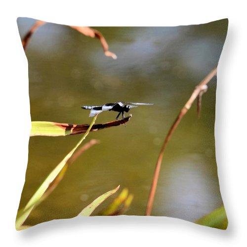 Tiny Blue-eyed Dragon Throw Pillow featuring the photograph Tiny Blue-eyed Dragon by Maria Urso