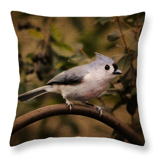 Backyard Bird Throw Pillow featuring the photograph Tiny Treasure by Jai Johnson