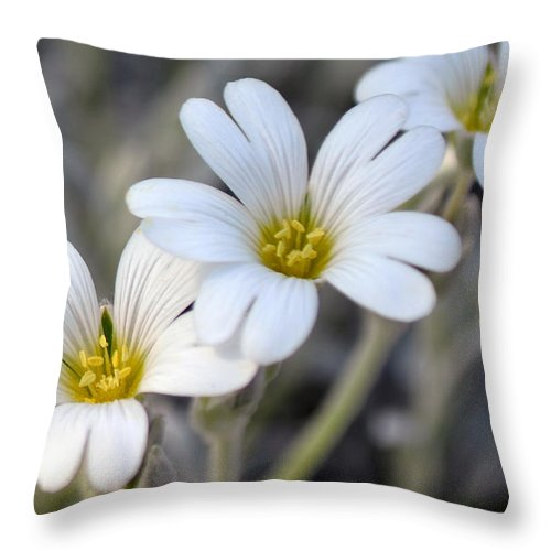 Flower Throw Pillow featuring the photograph Tiny White Flowers #1 by Beth Sawickie