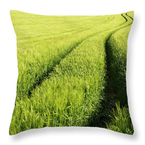 Scenics Throw Pillow featuring the photograph Tire Tracks In Grain Field by Thomas Winz
