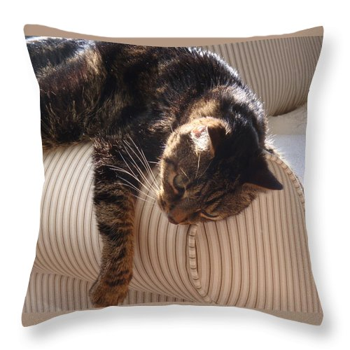 Kitty Throw Pillow featuring the photograph Tired Kitty by Kim Chernecky