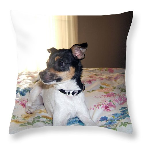 Dog Throw Pillow featuring the photograph 'tis Herself by Barbara McDevitt