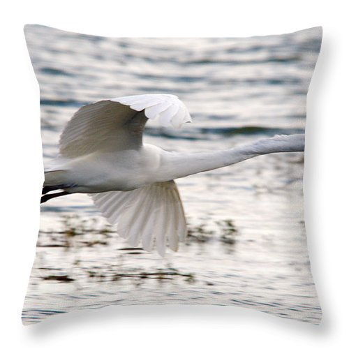 Egret Throw Pillow featuring the photograph To Infinity And Beyond by Roy Williams