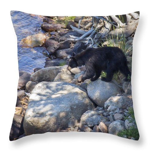Black Bear Throw Pillow featuring the photograph To The River by Carolyn Fox