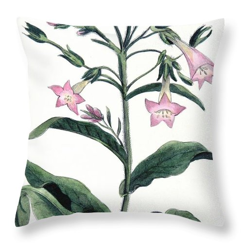 Tobacco Throw Pillow featuring the painting Tobacco Nicotiana Tabacum by Anonymous