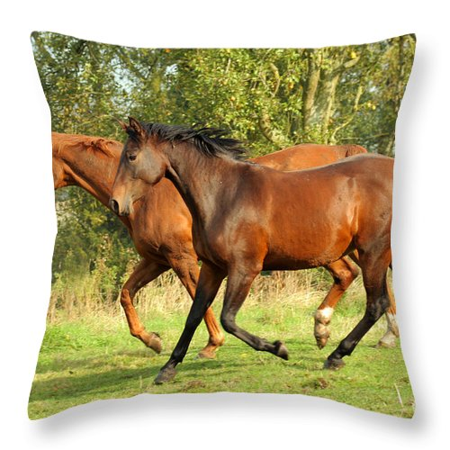 Horse Throw Pillow featuring the photograph Together Now by Angel Ciesniarska