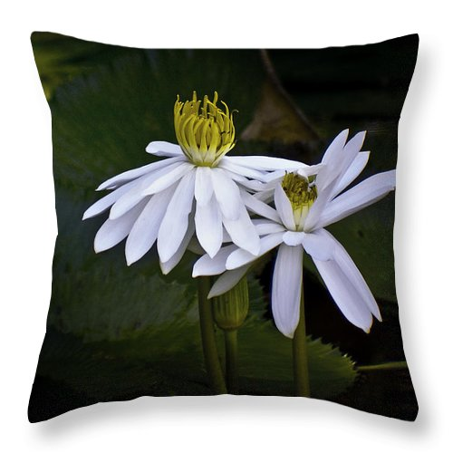 Floral Throw Pillow featuring the photograph Togetherness by Holly Kempe