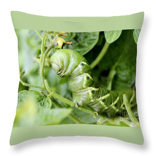 Tomato Throw Pillow featuring the photograph Tomatoe Hornworm by Janice Byer