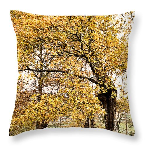 Magic Throw Pillow featuring the photograph Tombs Under Oaktree by Weston Westmoreland
