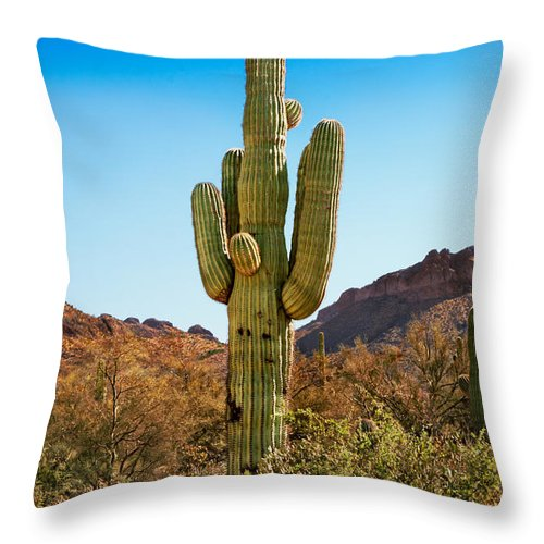 Path Throw Pillow featuring the photograph Tonto National Forest Saguaro by Jo Ann Snover