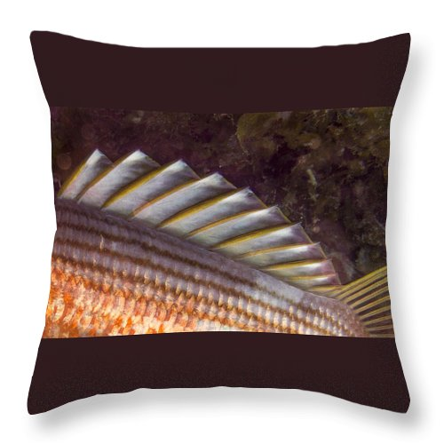 Grand Cayman Throw Pillow featuring the photograph Top Fin Design by Jean Noren