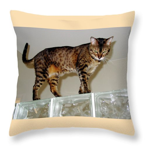 Bengal Cat Throw Pillow featuring the photograph Tora On Glass II by Phyllis Kaltenbach