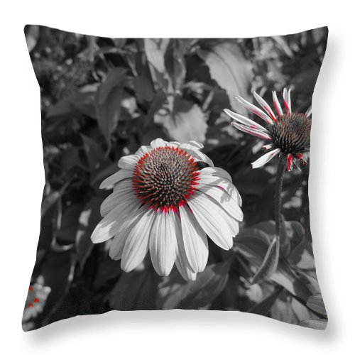 Coneflower Throw Pillow featuring the photograph Touch Of Red Invite by Tim G Ross