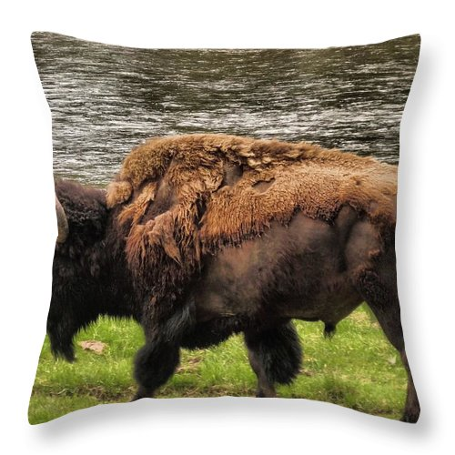 Bison Throw Pillow featuring the photograph Tough by Dan Sproul