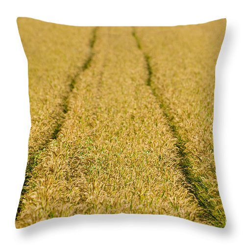 Tracks Throw Pillow featuring the photograph Tracks by Mats Silvan