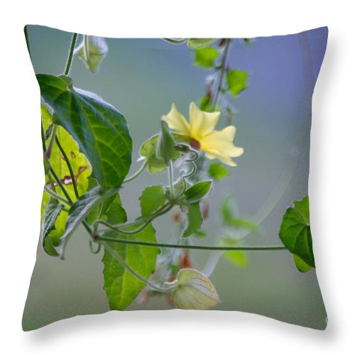 Adria Trail Throw Pillow featuring the photograph Trailing Vines by Adria Trail