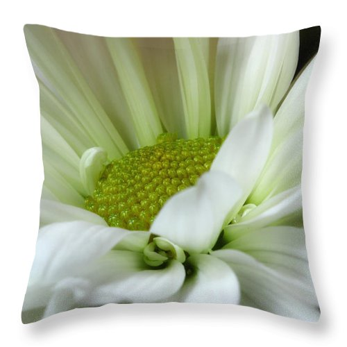 Daisy Throw Pillow featuring the photograph Tranquil by Michael Eingle