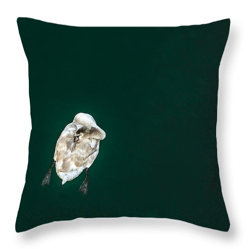 Swan Throw Pillow featuring the photograph Tranquility On The Water by Andreas Berthold