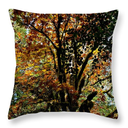 Trees Throw Pillow featuring the photograph Transition by Stephanie Bland