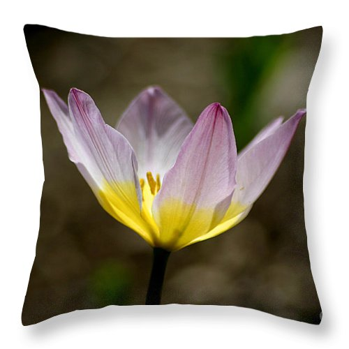 Tulip Throw Pillow featuring the photograph Translucent by Living Color Photography Lorraine Lynch