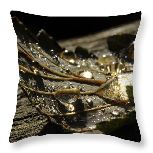Shadows Throw Pillow featuring the photograph Transparencies by Connie Handscomb