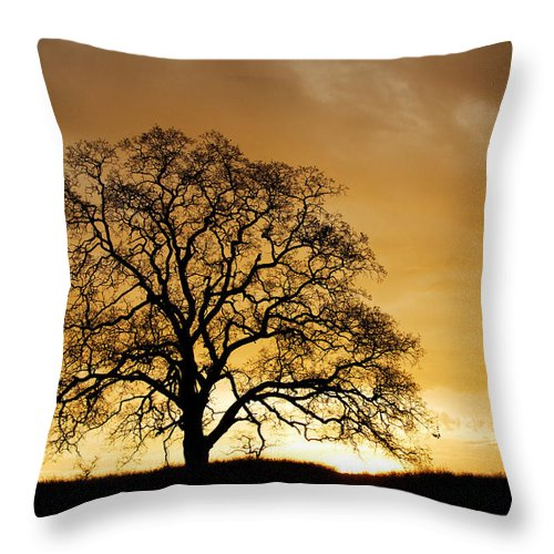 Tree Throw Pillow featuring the photograph Tree At Golden Sunrise by Robert Woodward