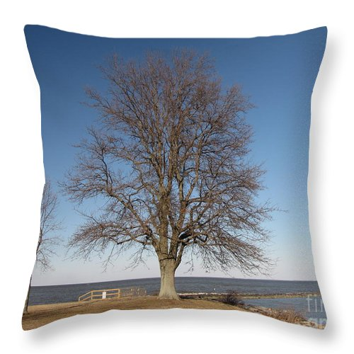 Schuminweb Throw Pillow featuring the photograph Tree At Sandy Point by Ben Schumin