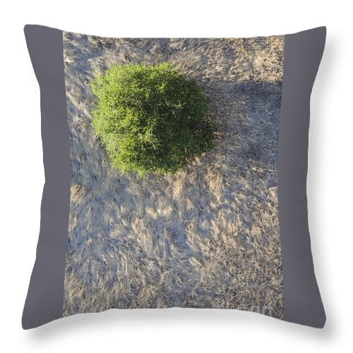 Napa Valley California Tree Trees Grass Grasses Texture Textures Throw Pillow featuring the photograph Tree In Grass From Balloon by Bob Phillips