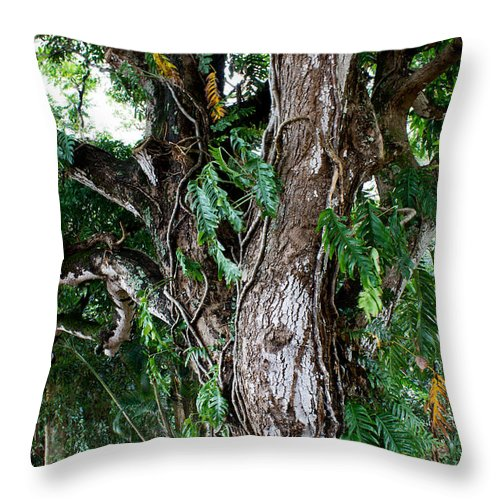 Monkey Pod Throw Pillow featuring the photograph Tree In Kauai by Suzanne Luft