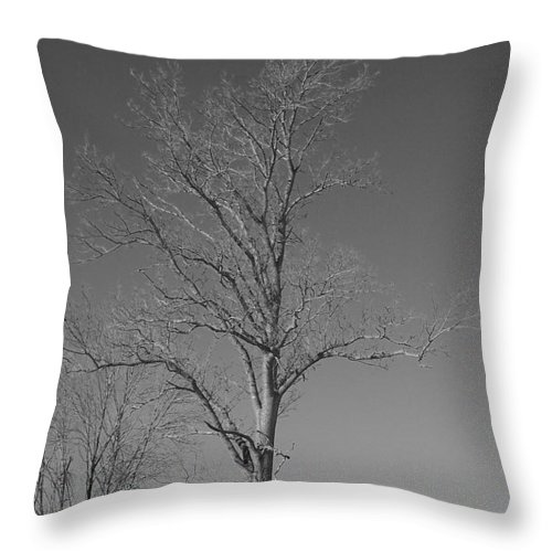 Tree Throw Pillow featuring the photograph Tree In Winter by Michelle Miron-Rebbe