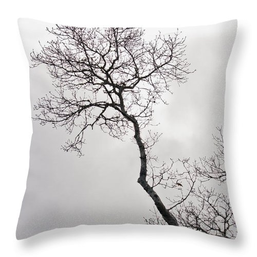 Tree Throw Pillow featuring the photograph Tree Limb 2 by Dennis Coates