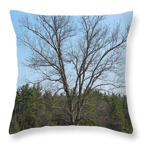 Throw Pillow featuring the photograph Tree by MTBobbins Photography