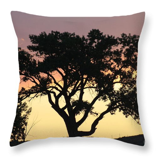 Tree Throw Pillow featuring the photograph Tree Of Life by Brandi Maher