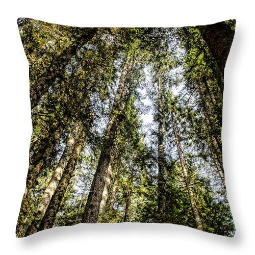 Trees Throw Pillow featuring the photograph Tree Tops by Heather Applegate