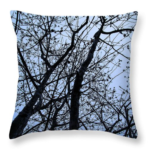 Trees Throw Pillow featuring the photograph Trees From Below by Mechala Matthews