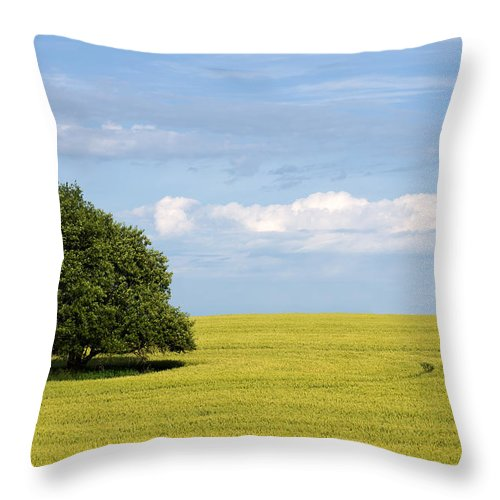 Grass Family Throw Pillow featuring the photograph Trees In Wheat Field by Simplycreativephotography