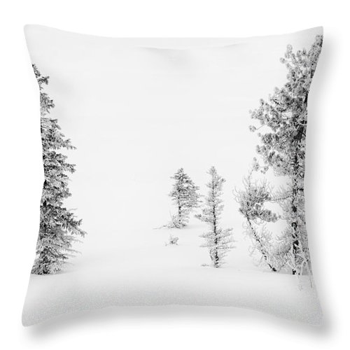 Nature Throw Pillow featuring the photograph Trees With Hoar Frost by John Shaw