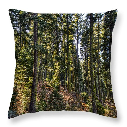 Flowers & Plants Throw Pillow featuring the photograph Trees With Moss In The Forest by Gregory Dean