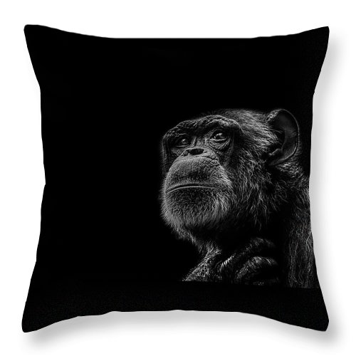 Chimpanzee Throw Pillow featuring the photograph Trepidation by Paul Neville