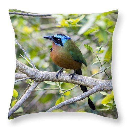 Tobago Throw Pillow featuring the photograph Trinidad Motmot In Tobago by Hugh Stickney