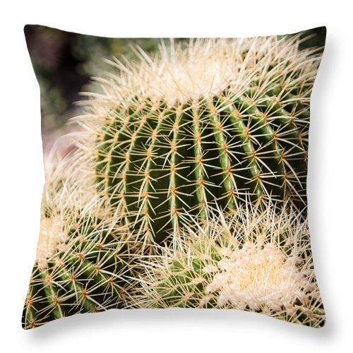 Botanical Throw Pillow featuring the photograph Triple Cactus by John Wadleigh