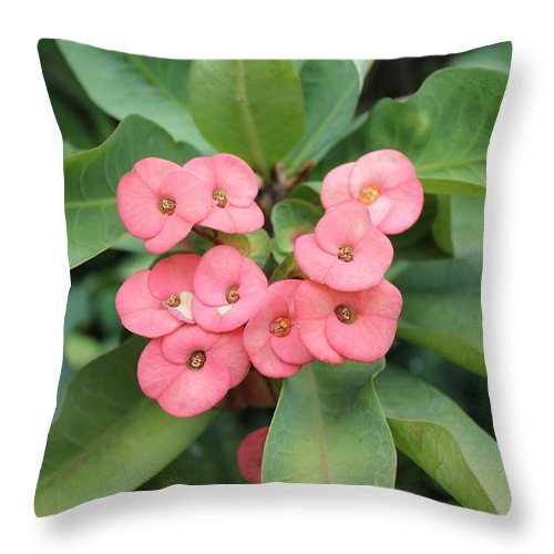 Flower Throw Pillow featuring the photograph Tropical Bloom by Robin Raible